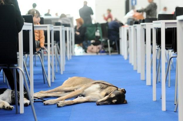 Podatek od psa to opłata lokalna /AFP