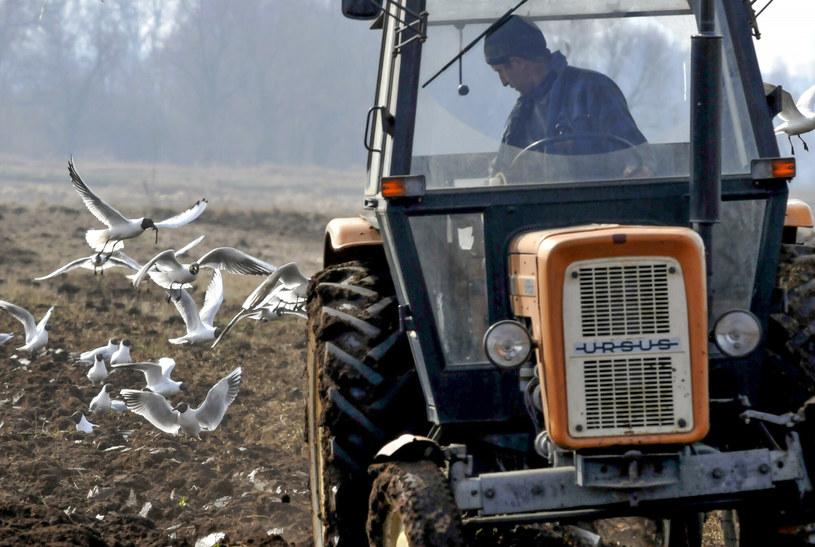 Podatkowe prezenty także dla rolników /Piotr Kamionka /Reporter