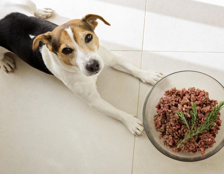 Podawaj psu jedzenie dwa razy dziennie