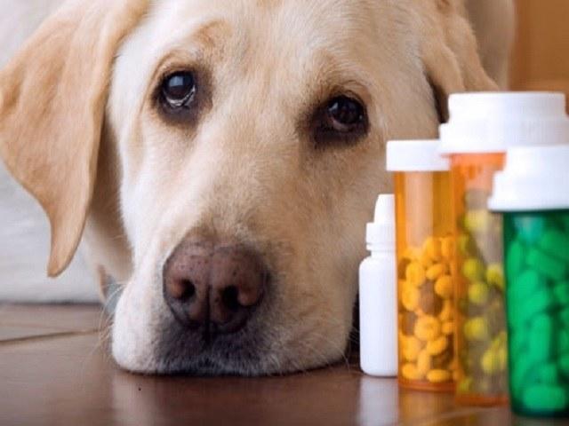 podawanie leków psu /© Photogenica
