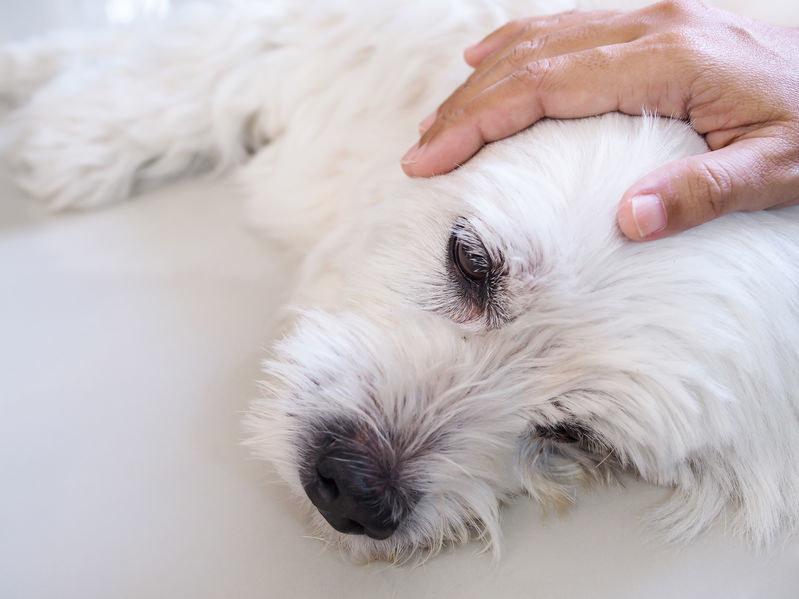 Podczas ataku staraj się uspokoić psa /123RF/PICSEL