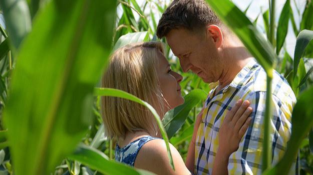 Podczas spaceru Marysia i Michał lądują w polu kukurydzy, spędzając w nim upojne chwile… /Bogdan Bogielczyk /ATM