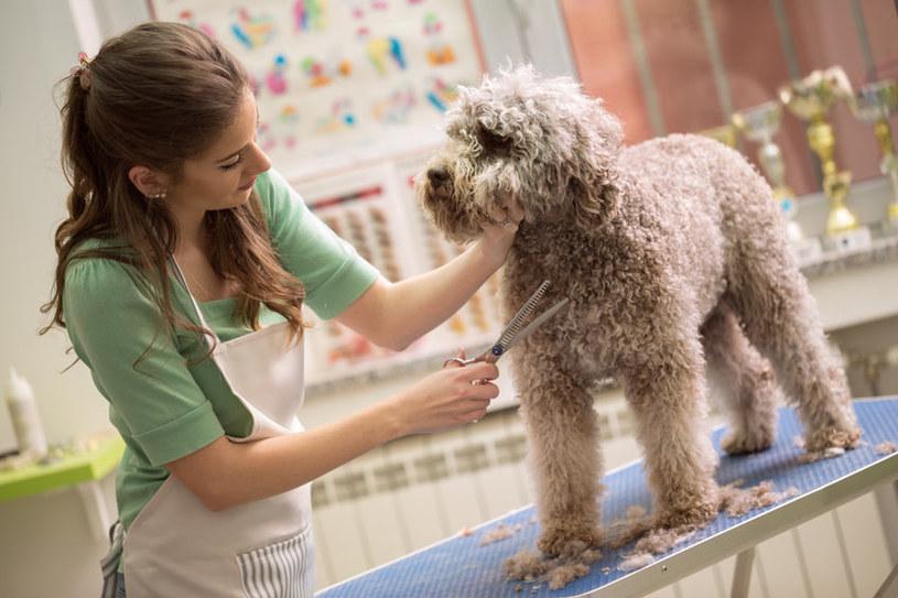 Podczas strzyżenia pies powinien czuć się bezpiecznie