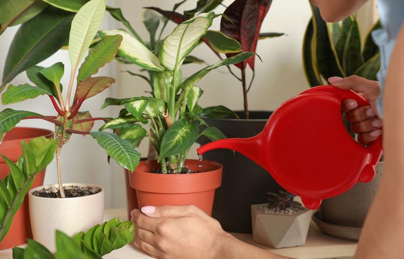 Podlewanie roślin /©123RF/PICSEL