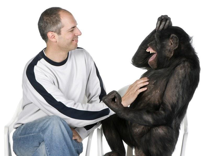 Podobieństwo do szympansa /© Photogenica