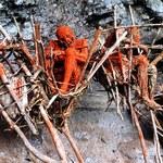 Podpalają ciała zmarłych - tak okazują im szacunek