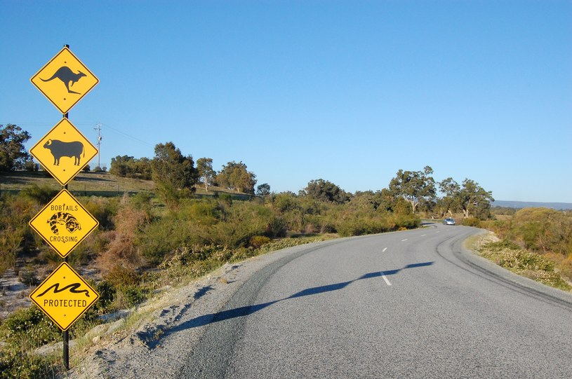 Podróżnicy dotarli ostatecznie do Perth /123RF/PICSEL