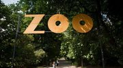 Podrzucił krokodyla pod bramę warszawskiego zoo