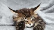 Podstawy żywienia kota:  Dlaczego zbilansowanie karmy jest ważne