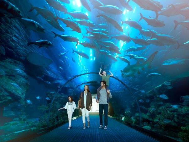Podwodny świat zwierząt możemy podziwiać, spacerując przeszklonymi korytarzami /123RF/PICSEL