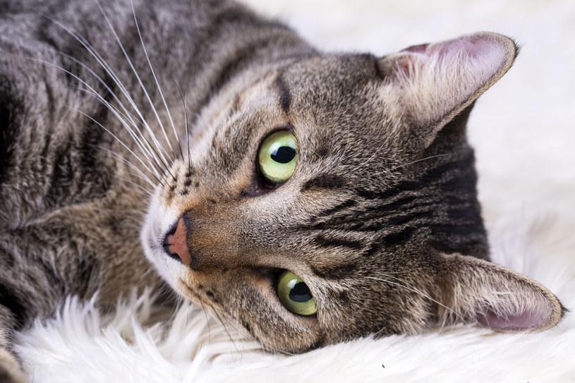 Pogłaszcz kota i zamrucz - to pomoże mu się uspokoić /123RF/PICSEL