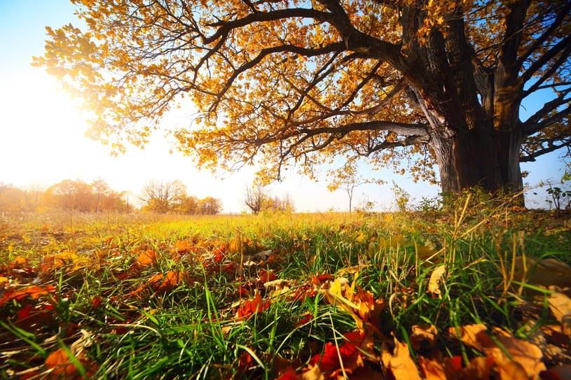 Pogoda 1 listopada na ogół ma nam sprzyjać /123RF/PICSEL