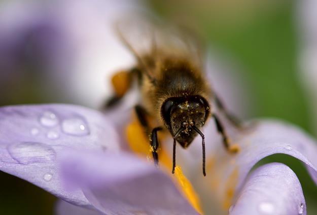 Pogoda w tym roku nie oszczędza pszczół /AFP