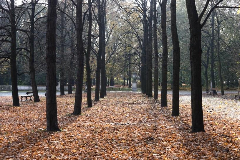 Pogodna jesień nie ustąpi; zdj. ilustracyjne /STANISLAW KOWALCZUK /East News