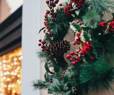 Poinsecja, grudnik, azalia. Kwiaty najlepsze na Boże Narodzenie