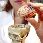 Pokolenie przegrzanych mózgów