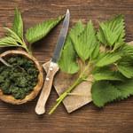 Pokrzywa: Chwast czy lecznicza roślina?