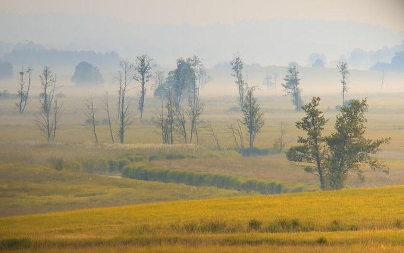 Pola w okolicach wsi Stare Kawkowo /123RF/PICSEL