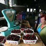 Polacy przekonali się do żywności bio