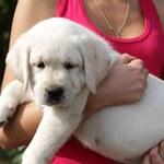 Polacy zaczęli kupować psy na potęgę. Eksperci są przerażeni