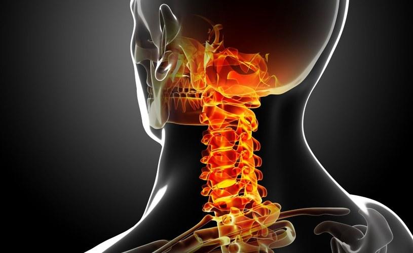 Połączenie przerwanego rdzenia kręgowego jest kluczowe w kontekście przeszczepu głowy /123RF/PICSEL