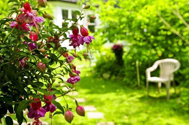 Polaku - dbaj o ogródek, to się opłaca /© Panthermedia