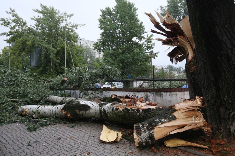 Połamane drzewa na warszawskiej Saskiej Kępie. Gwałtowna burza przeszła w niedzielę nad Warszawą /Paweł Supernak /PAP