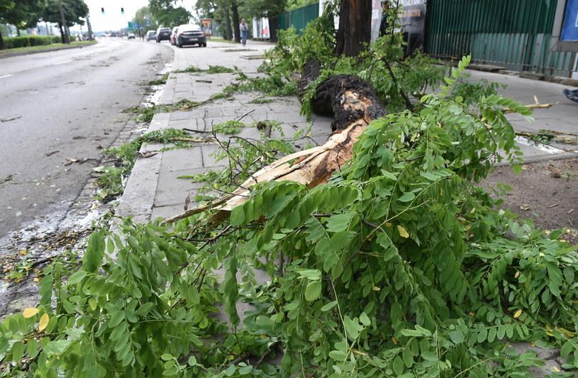 Połamane drzewa po nawałnicy /Jacek Bednarczyk /PAP
