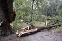 Połamane drzewa, uszkodzone dachy po burzach na Podkarpaciu