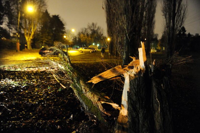 Powalone drzewa i brak prądu. Orkan Ksawery daje się we znaki
