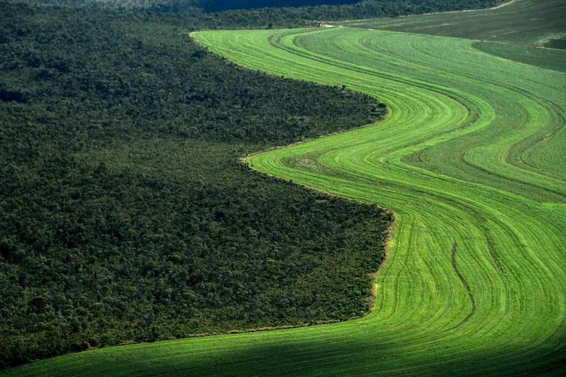 Pole uprawne w Brazylii /AFP