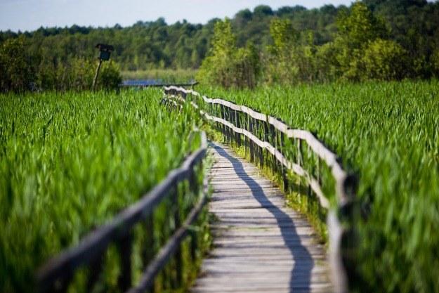 Poleski Park Krajobrazowy; kładka prowadząca do jednego z jezior, fot. Tomasz Wiech /Agencja FORUM