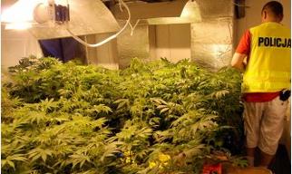 Policja likwiduje nielegalną fabrykę marihuany /Policja /RMF/Policja