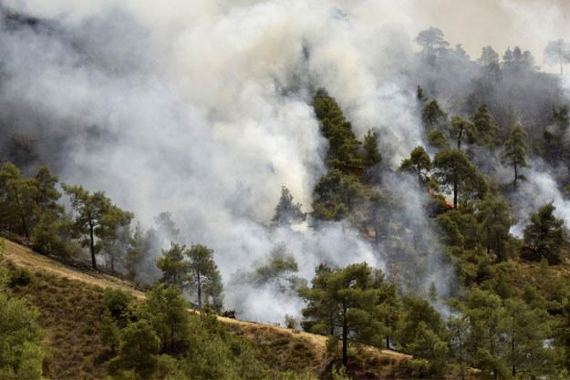 Policja podejrzewa, że pożar spowodował 13-letni chłopiec, który bawił się zapalniczką koło letniskowego domu swojej rodziny /AFP