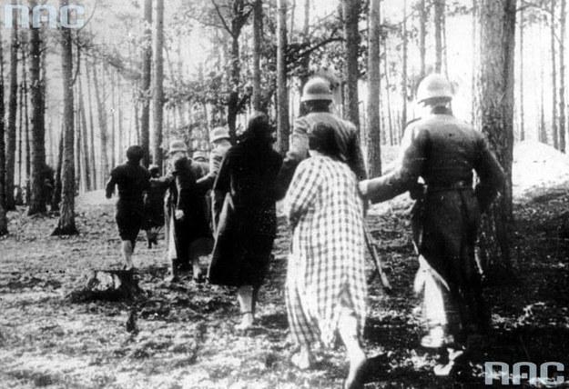 Policjanci niemieccy prowadzą Polaków na rozstrzelanie w Palmirach /Z archiwum Narodowego Archiwum Cyfrowego