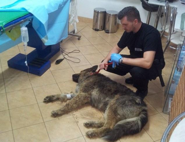 Policjant z uratowanym psem /Policja