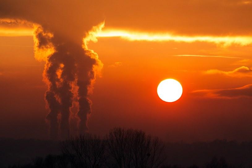 Politycy przekonują, że zalesianie jest w stanie zniwelować wpływ CO2 na środowisko. Nic bardziej bardziej mylnego... /East News