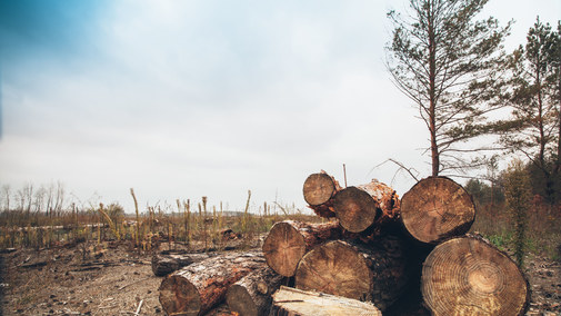 """""""Polityka ekologiczna państwa 2030"""" bez słońca i wiatru"""