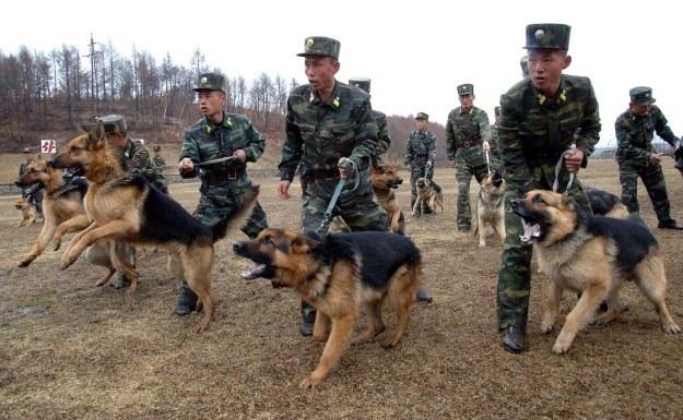 Północnokoreańscy żołnierze w trakcie ćwiczeń z psami policyjnymi /AFP