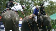 Polo na słoniach - powoli, ale do celu