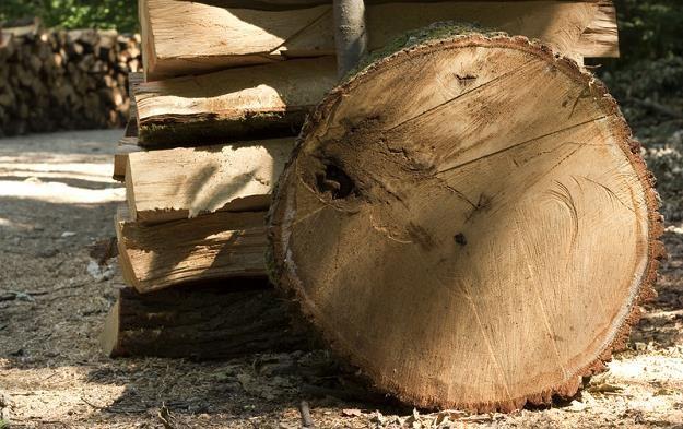 Połowa importowanego drewna jest z nielegalnych wycinek /© Panthermedia