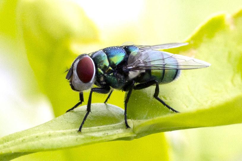 Polowanie na muchę przyczyną wybuchu domu, zdj. ilustracyjne /JACK GUEZ /AFP