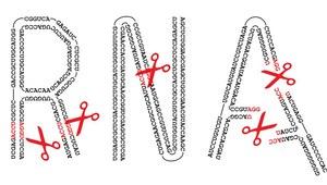 """Polscy naukowcy odkryli """"nożyczki do cięcia RNA"""""""
