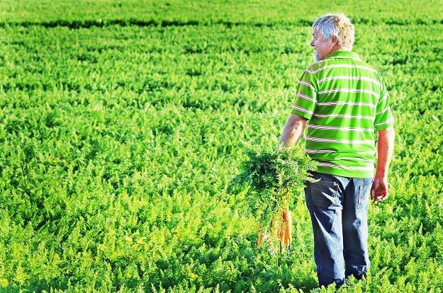 Polscy rolnicy żyją z unijnych dopłat /©123RF/PICSEL