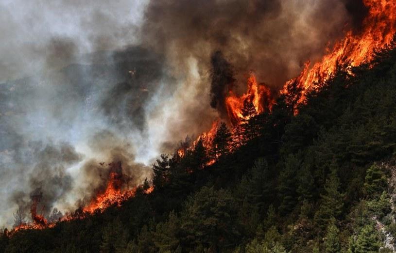 Polscy strażacy pomogą w gaszeniu pożarów w Turcji /AA/ABACA/Abaca /East News