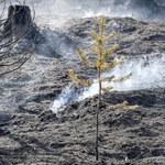 Polscy strażacy w Szwecji: Pożar został opanowany