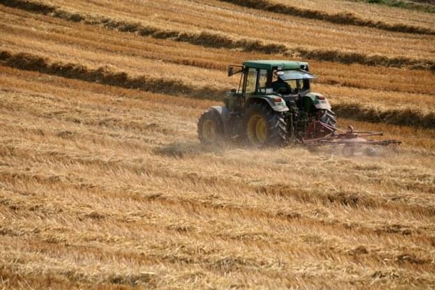 Polska generuje aż 20 proc. całkowitego zatrudnienia w rolnictwie Unii Europejskiej /© Panthermedia