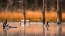 Polski fotograf przyrody zdobywa kolejne nagrody