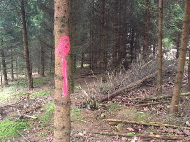 Pomalowane na różowo drzewa w parku w Trójmieście /Kuba Kaługa /RMF FM