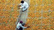 Pomarańcze, czy mandarynki?